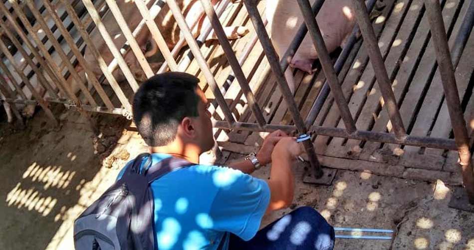 31b401fb4 Acumar clausuró un criadero de cerdos